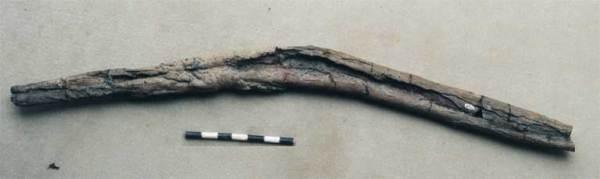 Animalia>Chordata>Vertebrata>Gnathostomata>Tetrapoda>Reptilia>Sauropterygia>Plesiosauroidea>Plesiosauridae