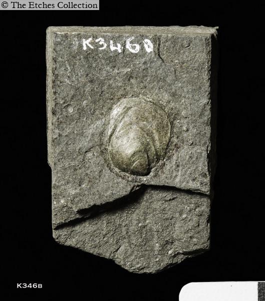 image K346