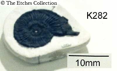 image K0282