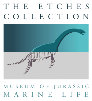 The Etches Collection